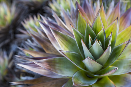 tolerate: Aloe vera plants, tropical green plants tolerate hot weather.