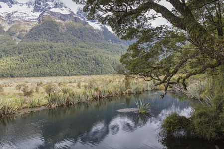 fiordland: The Chasm (Fiordland, South Island, New Zealand) Stock Photo