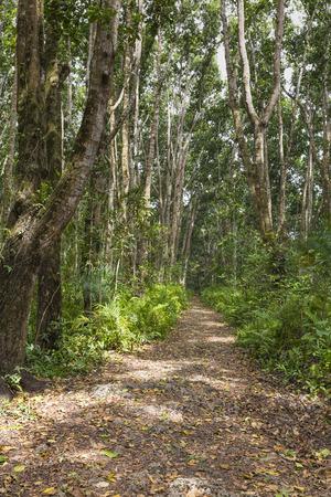 zanzibar: Jozani Forest, Zanzibar, Tanzania Stock Photo