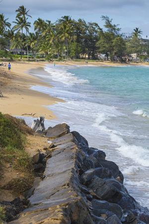 kauai: Coconut Palm tree on the sandy beach in Hawaii, Kauai