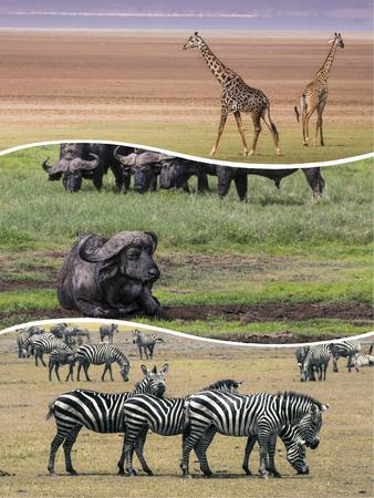 Collage of Animals from Tanzania - travel background (my photos) Zdjęcie Seryjne