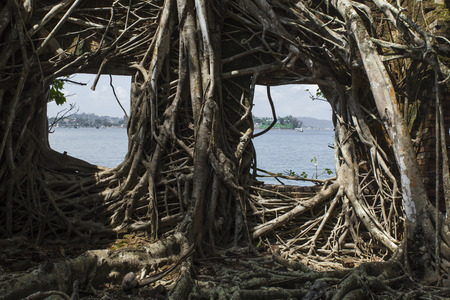 grunge tree: Ruin of abandoned building covered with roots on Ross Island. Andaman Islands, India