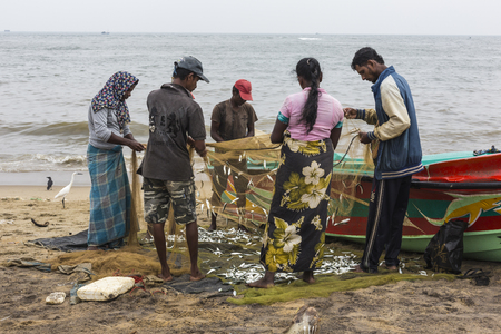 NEGOMBO, SRI LANKA - NOVEMBER 30: People collect dried fish and put into the box on the beach in Negombo on November 30, 2016.