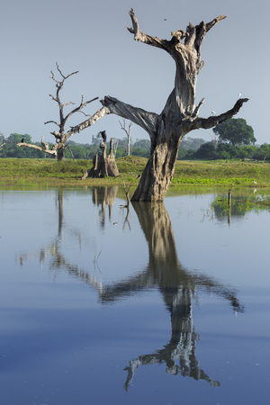 Wild landscape at morning time. Udawalawe National Park in Sri Lanka.