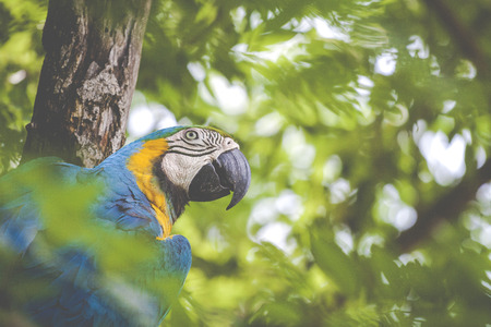 A blue and yellow mackaw parrot