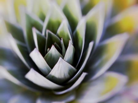 tolerate: Aloe vera plants, tropical green plants tolerate hot weather.