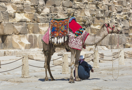 chephren: Egyptian Camel at Giza Pyramids background. Tourist attraction - horseback riding on a camel. Traditional ancient places in the desert of Egypt and tour on Africa. Stock Photo
