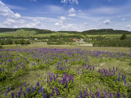 Aerial view of the summer time in mountains near Stronie Slaskie. Lupinus flowers on the hill - clouds over blue sky. View from above.