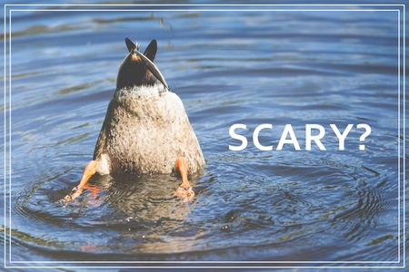 Word Scary. Duck diving in lake.