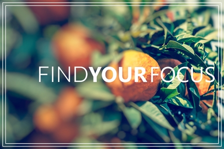 Find Your Focus.Branch orange tree fruits green leaves. Zdjęcie Seryjne