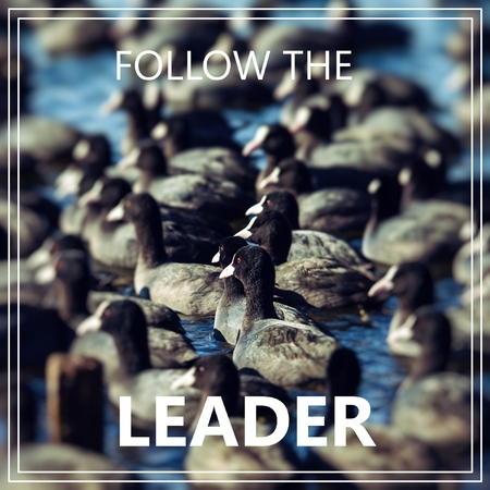 Fallow the Leader. Many coots going same way. Zdjęcie Seryjne