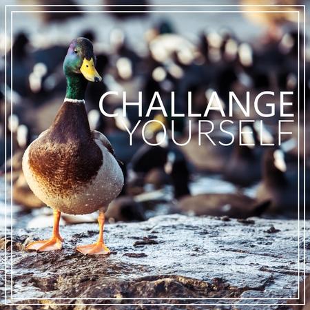 Challange Yourself. Wild male Mallard duck.