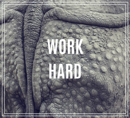 hard: Word Work Hard. Closeup of the strong armor of a rhinoceros. Stock Photo