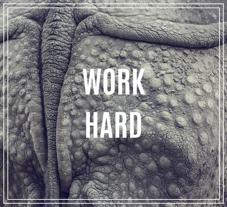 Word Work Hard. Closeup of the strong armor of a rhinoceros. Zdjęcie Seryjne