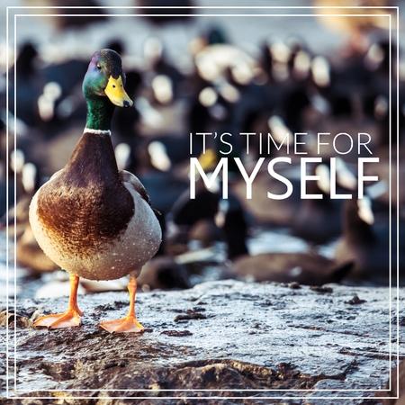 Its time for myself. Wild male Mallard duck.