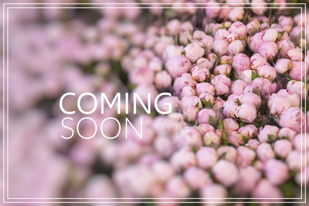 Coming Soon. Lots of pretty and romantic violet and pink peonies in floral shop. Reklamní fotografie
