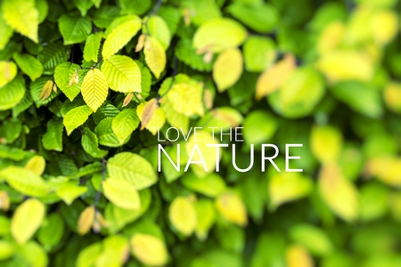 Love the Nature over green leaf background. Stock Photo