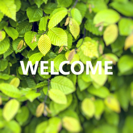 Word Welcome over green leaf background. Stock Photo