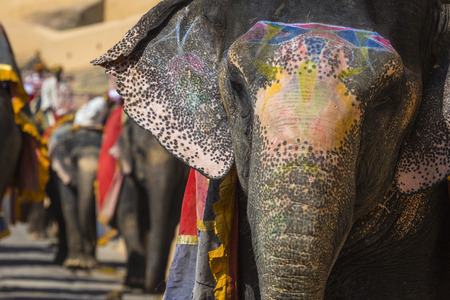 Unidentified men ride decorated elephants in Jaleb Chowk in Amber Fort in Jaipur, India. Elephant rides are popular tourist attraction in Amber Fort.