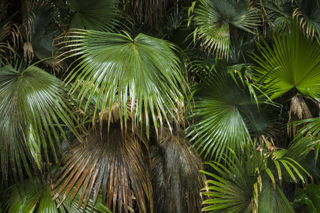 textured wall: beautiful palm leaves of tree in sunlight