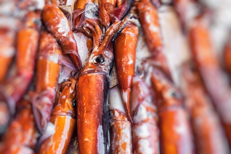 Fresh squid seafood for sale at a market in Palermo, Sicily, Italy Stock Photo