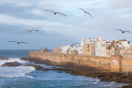 Seagulls on the sky in Essaouira, city and port on the Atlantic coast in Morocco, North Africa