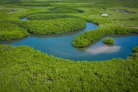 Aerial view of mangrove forest in Gambia. Photo made by drone from above. Africa Natural Landscape.