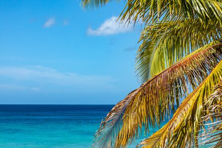 Trinidad, Cuba. Coconut on an exotic beach with palm tree entering the sea on the background of a sandy beach, azure water, and blue sky.