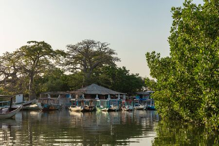 Gambia Mangroves. Lamin Lodge. Traditional long boats. Green mangrove trees in forest. Gambia.