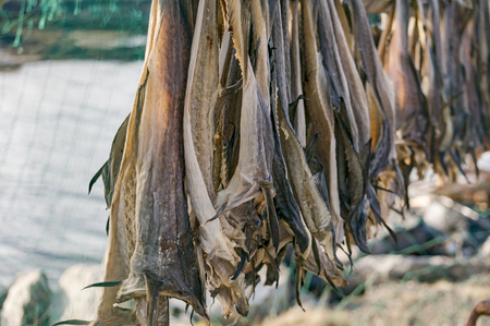 stockfish:  Atlantic cod stockfish hanging, drying flake (hjell). Aquaculture and seafood from the Norwegian Sea, Froya Hitra region, Norway Stock Photo