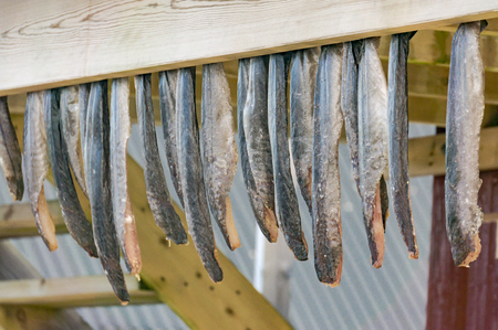 European eel stockfish hanging, drying flake (hjell). Aquaculture and seafood from the Norwegian Sea, Froya Hitra region, Norway Standard-Bild