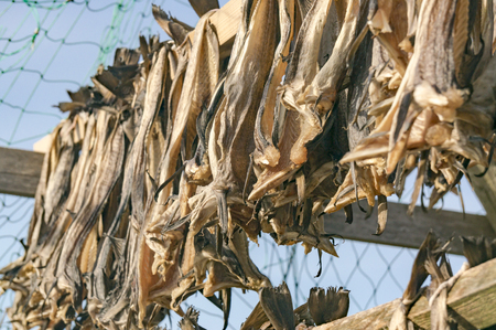 Atlantic cod stockfish hanging, drying flake (hjell). Aquaculture and seafood from the Norwegian Sea, Froya Hitra region, Norway Standard-Bild