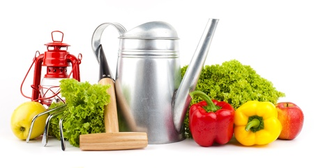 Garden tools and fresh vegetables isolated on white Stock Photo - 16696560