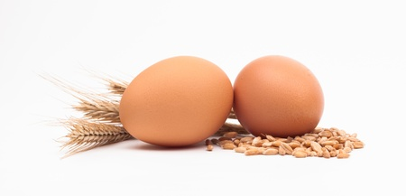 eggs and corn isolated on white background Stock Photo - 18166311