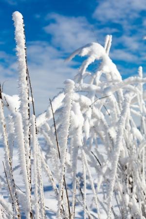 sleet: Winter tree with ice and blue sky