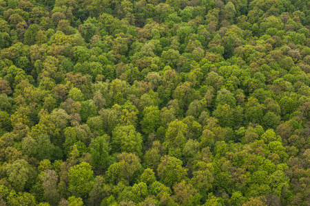 aerial view of forest  in Poland