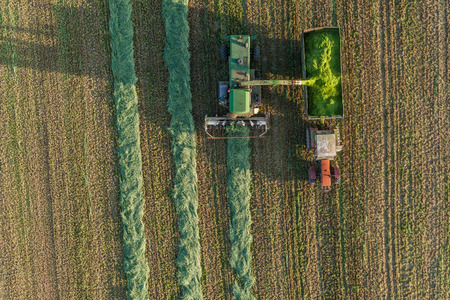 with harvest: aerial view of harvest fields with combine in Poland