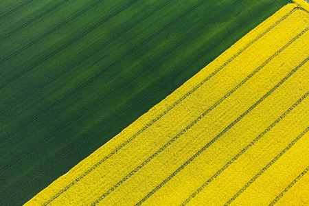 fly: aerial view of harvest fields in Poland