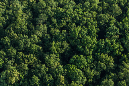 aerial view of the forest in Poland Standard-Bild