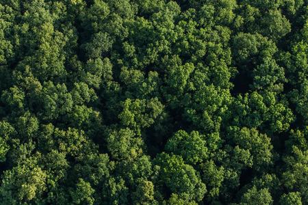 cenital: vista aérea del bosque en Polonia