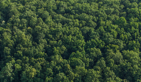 jungle foliage: aerial view of the forest in Poland Stock Photo