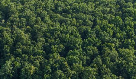 tree top view: Vue aérienne de la forêt en Pologne