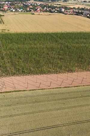 hopgarden: Aerial view of growing hops in a hop garden in Poland