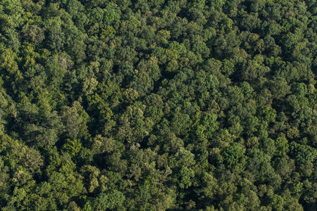 aerial view of the forest in Poland Stock Photo