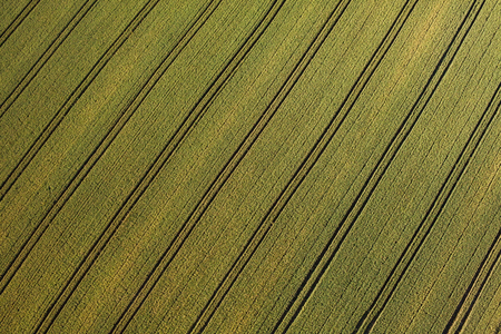 harvest: aerial view of green harvest field in Poland Stock Photo