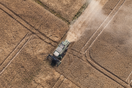 harvest: aerial view of combine on the harvest field in Poland