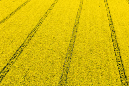 aerial view of the yellow harvest fields in Poland