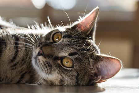 cat on the table Archivio Fotografico - 117003084