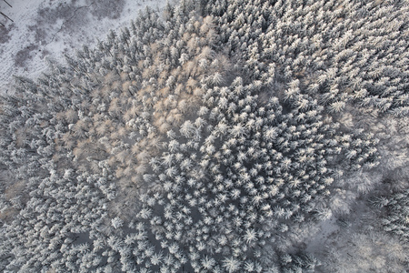 aerial view of the mountain forest landscape in winter Archivio Fotografico - 117003194