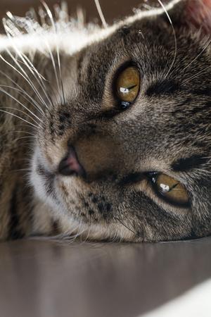 cat on the table Archivio Fotografico - 117006395